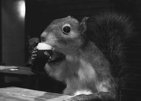 Eichhörnchen mit Guinness
